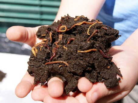 A Sustainable Living Tip - Composting…Indoors!