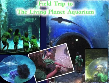 Early Childhood Field Trip to The Living Planet Aquarium